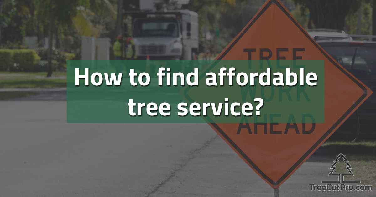 Affordable tree service work