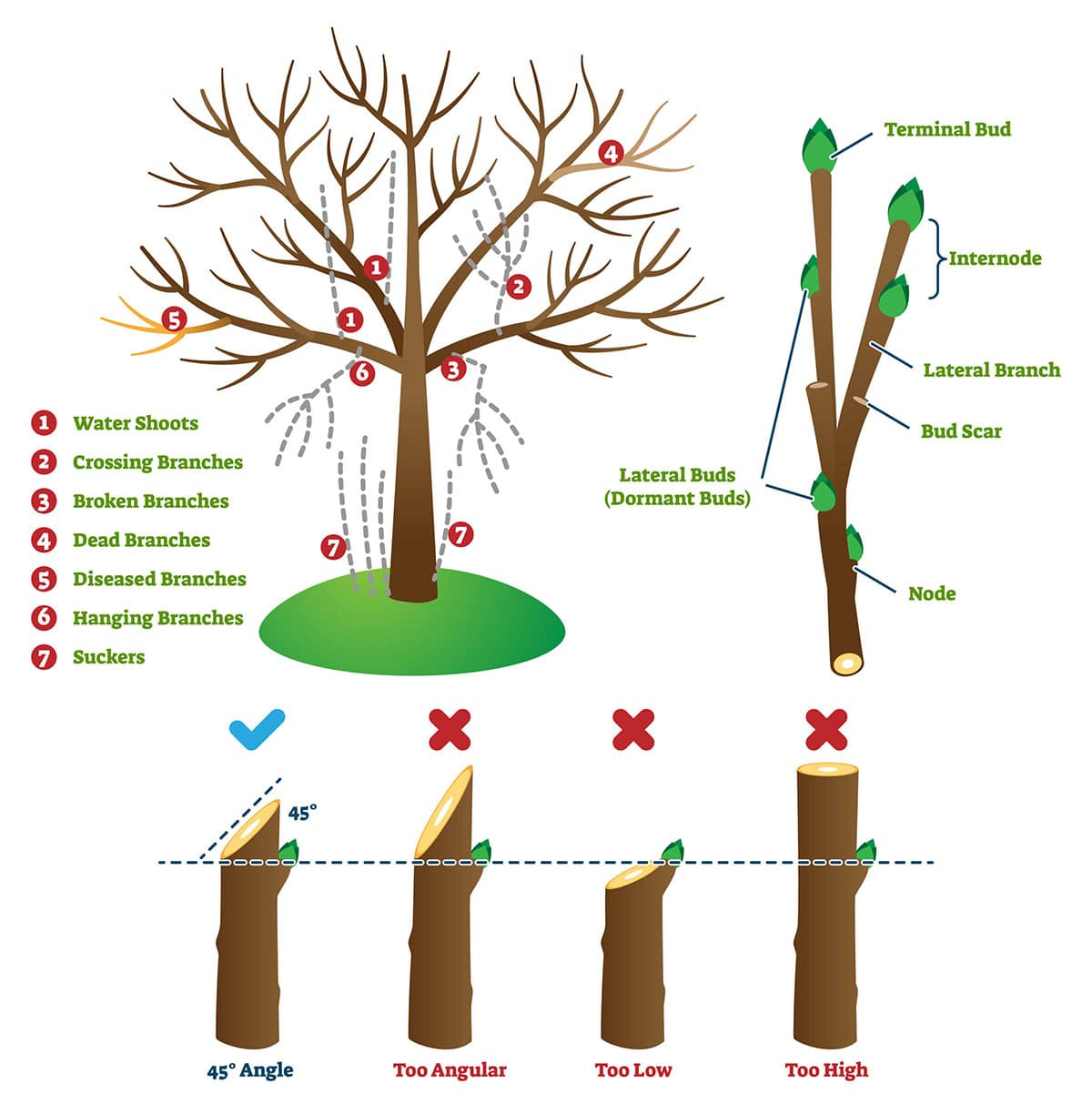 Correct pruning example
