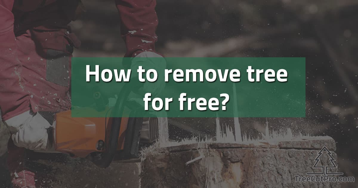 Free tree removing in action