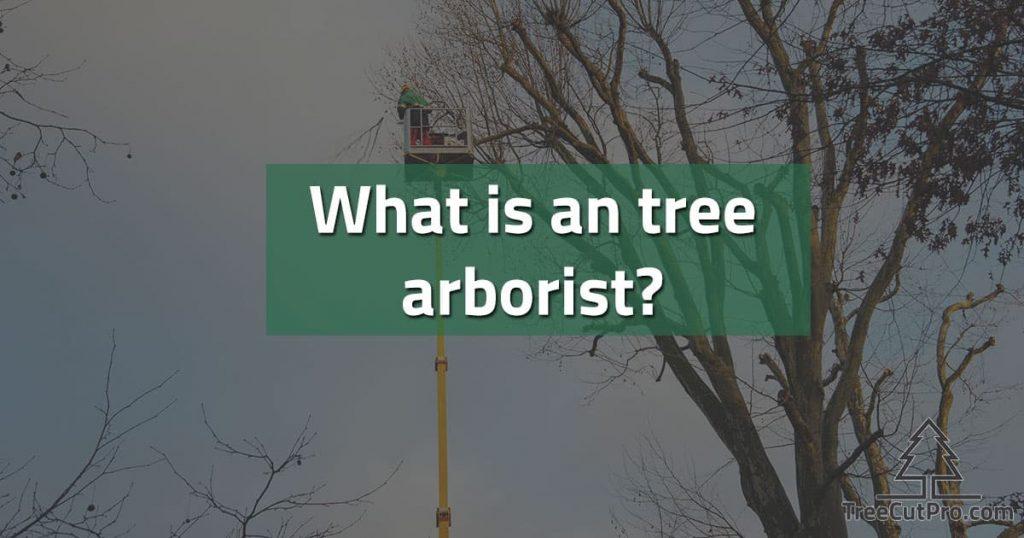 Tree arborist at work