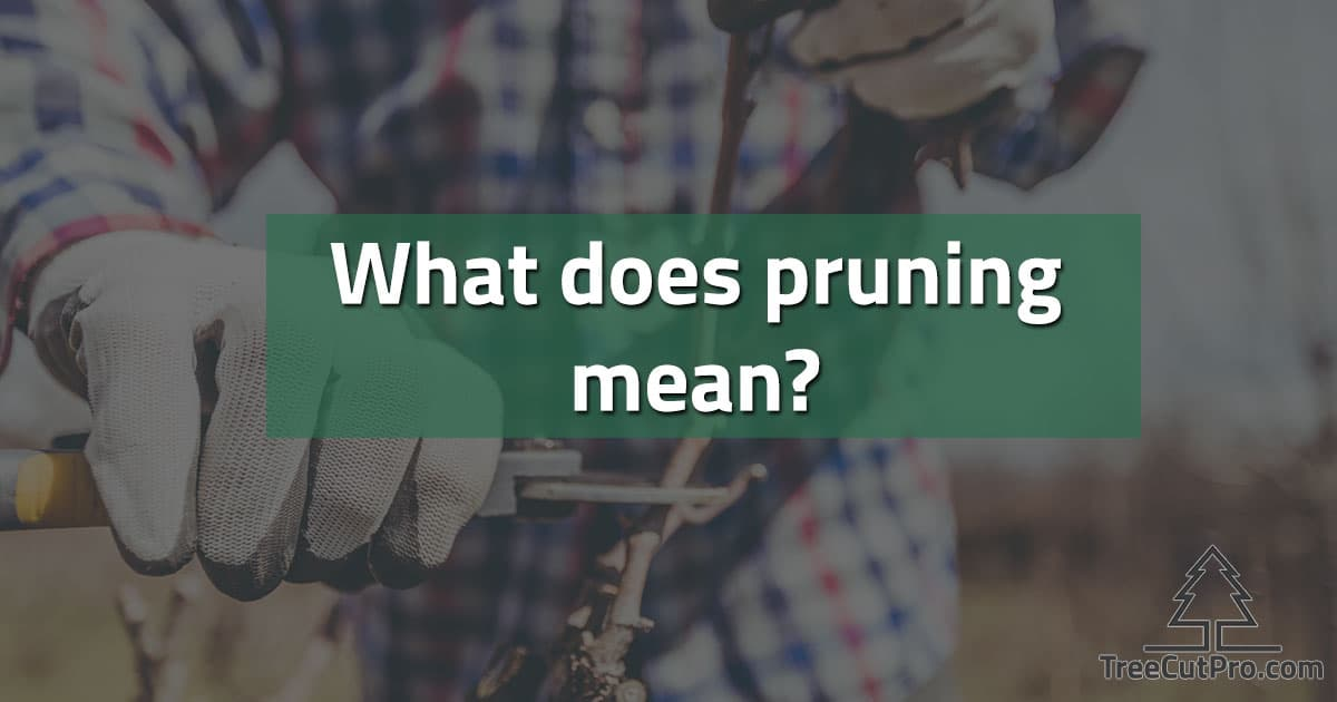 What does pruning mean?