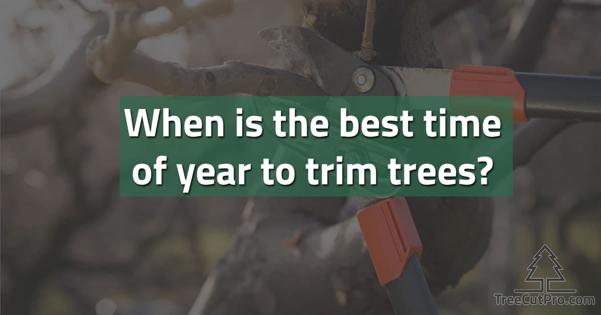 When to prune trees?